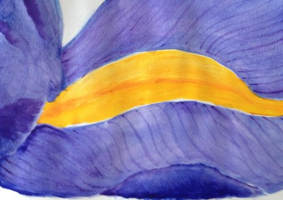 Iris Petal (watercolor)