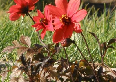Sonoma Botanicals 2